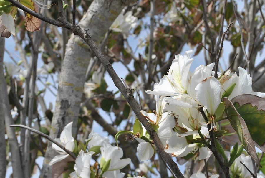 Spring+has+sprung