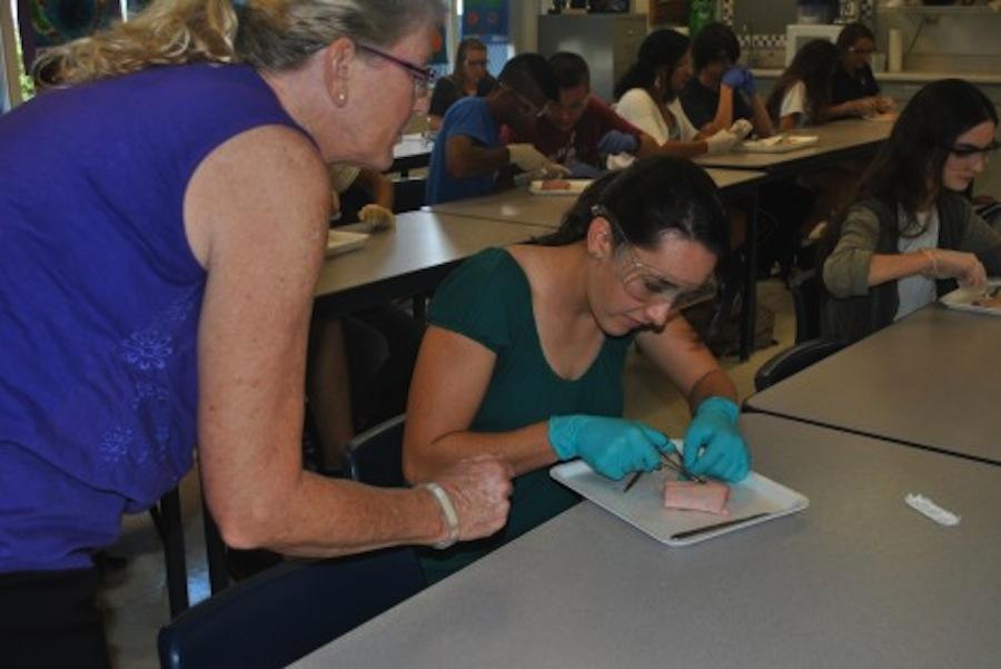 Anatomy+students+suture+on+pigs%27+feet