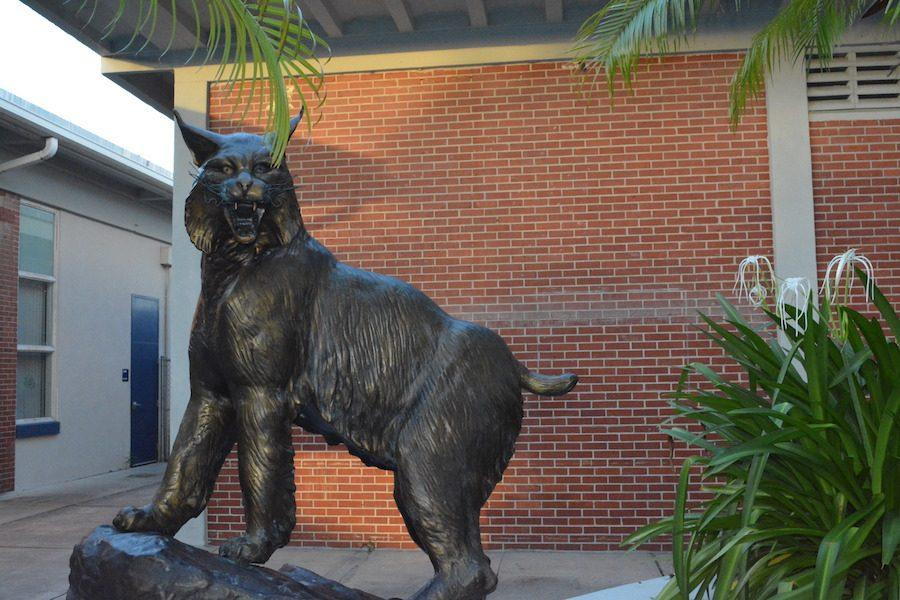 Whitworth+the+Wildcat+stands+tall+with+teeth+bared+as+he+embraces+his+new+home.
