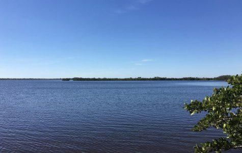 Lagoon could soon see massive fish kills
