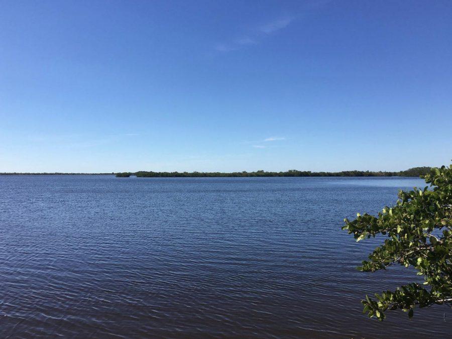 Lagoon+could+soon+see+massive+fish+kills